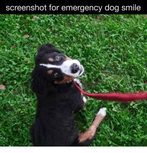 emergency puppy 25 best memes about smiling smiling memes