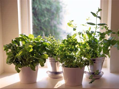 herbs   grow indoors year    grid news