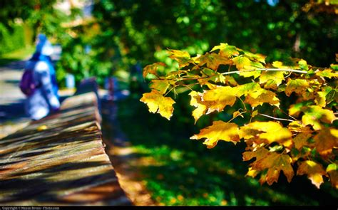 foto di bellissime l autunno in 23 bellissime foto consigli sul mondo della