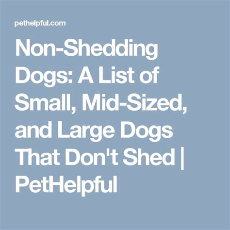 List Of Dogs That Dont Shed by 1000 Ideas About Non Shedding Dogs On List Of