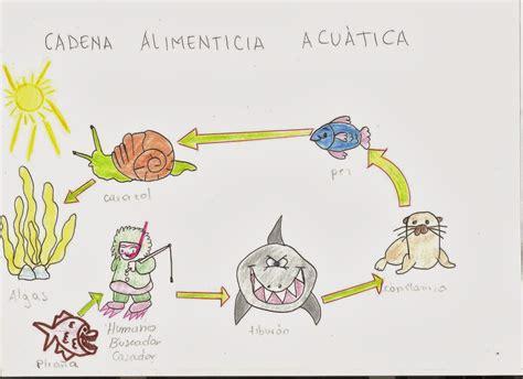 clases de cadenas alimenticias acuaticas blog de aula de biolog 236 a v01 diciembre 2013