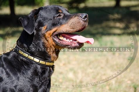 rottweiler strong collars for strong dogs rottweiler collars soft and strong leather