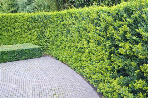 Garten Hecken Pflanzen by Hecken Richtig Pflanzen Hecken Ratgeber Garten Schl 252 Ter