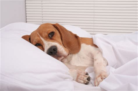 dogs sleeping in bedroom 15 good life lessons i ve taught my humans