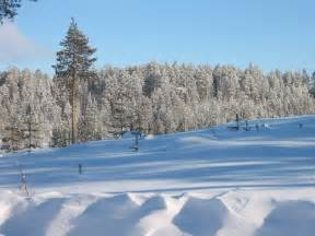 winter images file tolja forest in winter jpg wikimedia commons