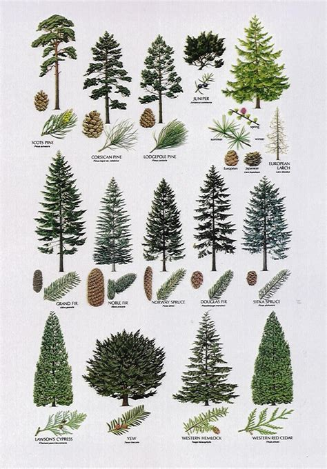 type of trees 8 proximity the elements different types of trees are