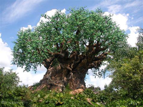 disney tree tree of in animal kingdom loses limb