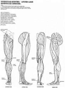 human muscles coloring anatomy coloring pages muscles human anatomy diagram