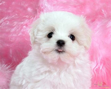 baby and puppy pictures white baby wallpaper 15313