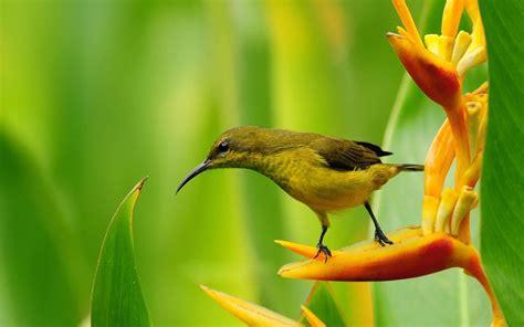 wallpaper flower bird small bird on bird of paradise flower wallpaper 1440 215 900