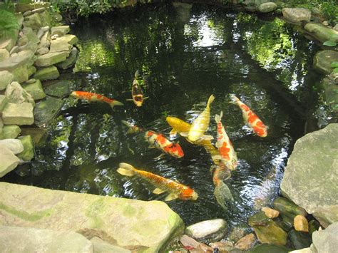 the gardener oh no not another koi pond