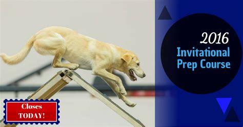 bad agility bad agility academy agility