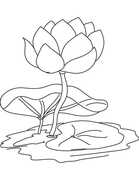 coloring pictures of lily flowers water lily flower and pad coloring page download free
