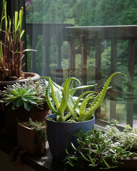 plants in house how to get healthy indoor plants interior designing ideas