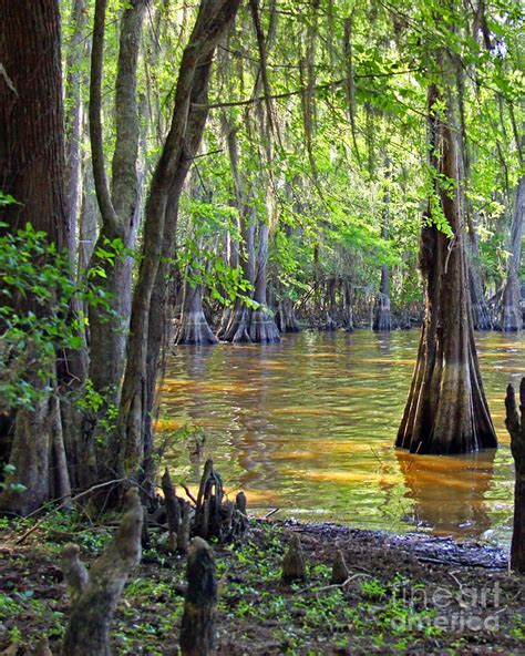 gravy boat paradise bay 348 best images about down on the bayou on pinterest
