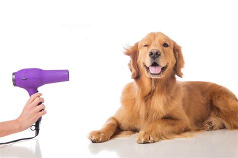 cortar el pelo a los perros 4 sencillos pasos para cortar el pelo a tu perro