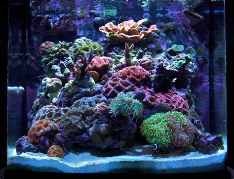 Minis Black 30g mini gbr 2009 featured nano reef aquariums nano reef
