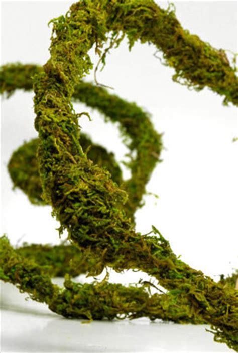 moss covered wire preserved vine  ft