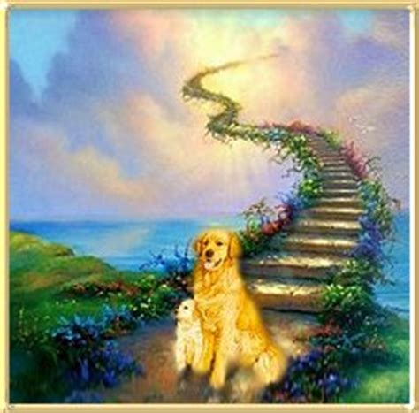 beaucroft golden retrievers beaucroft golden retrievers home page