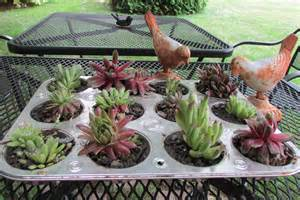 a different kind of container to plant hen and chicks in fred gonsowski garden home