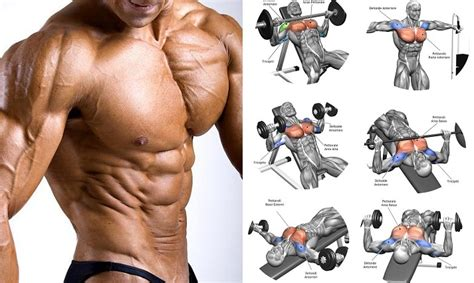 chest workout how to get big chest muscles