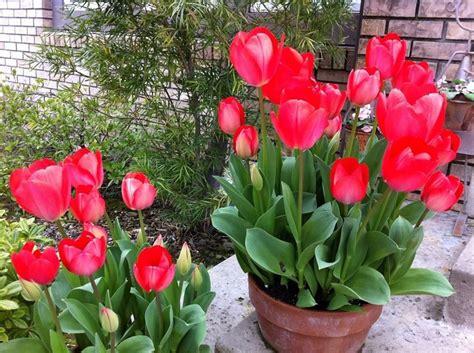 piante da vaso piante da vaso fioriere
