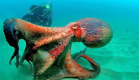 octopus l a group of scientists claim octopuses might be aliens