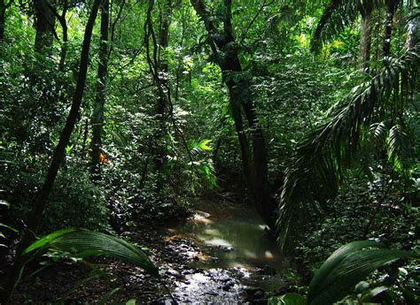 amazon jungle tropical rainforest amazon rainforest half of worlds rainforest