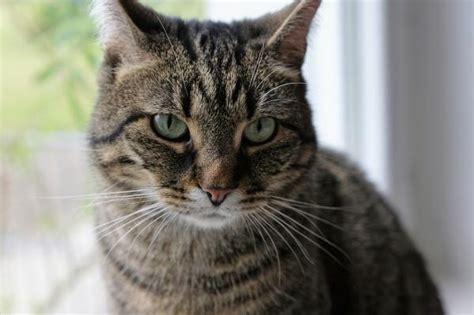 minicuentos de gatos y 191 por qu 233 mi gato no se deja tocar