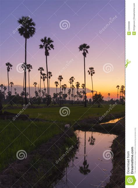 tree water sugar landscape sugar palm tree refect on water in twilight