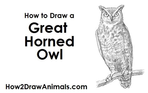 how to draw doodle owl realistic horned owl drawing