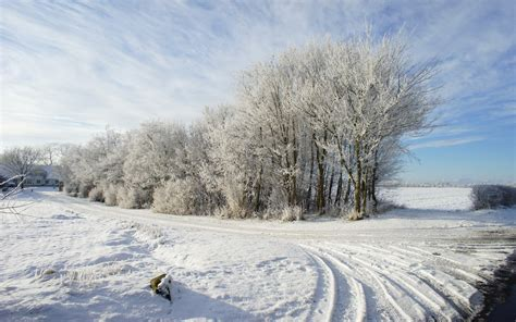 snowy path trees fields house wallpapers snowy path