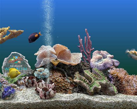 serenescreen marine aquarium download serenescreen marine aquarium download