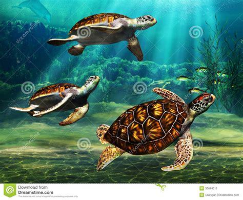 Hawaiian Floor Plans sea turtles stock image image 33684311