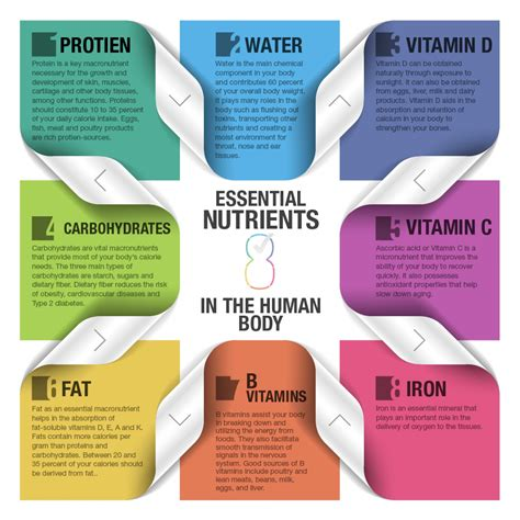 8 essential carbohydrates 8 essential nutrients of the human visual ly