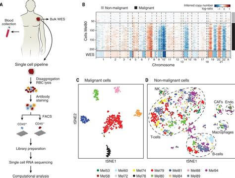 rnaseq workflow taking on melanoma one cell at a time rna seq