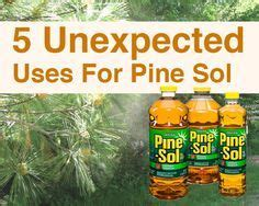 does pine sol kill bed bugs 1000 ideas about wasp killer on pinterest bee repellent