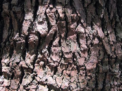 ruff bark bark free stock photo domain pictures