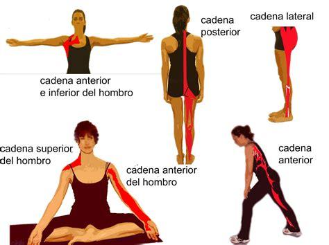 cadenas cinematicas del cuerpo humano pilates wellnessmagazine julio 2005