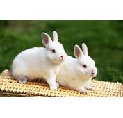 Cool Animals Pictures 20 Rabbit Wallpapers Funny And Cute