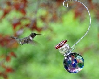 17 best images about for the birds on pinterest