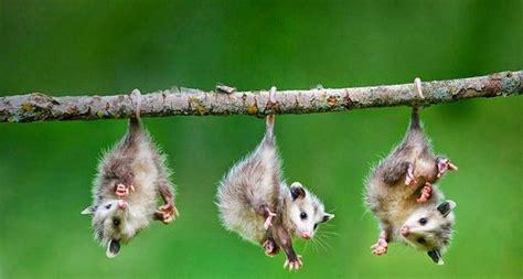 imagenes animales que viven en el bosque animales del bosque templado cu 225 les son nombres y c 243 mo