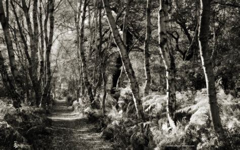 black and white woodland wallpaper black and white woods wallpaper wallpapersafari