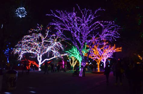 zoo lights arizona zoolights arizona magical giveaway couture in