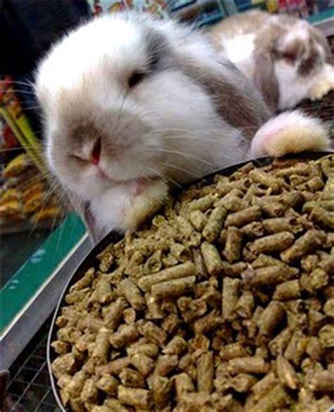 Makanan Pakan Pellet Kelinci Rabbit Food Ravit Diet 600gr memilih pellet kelinci