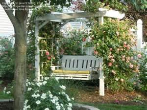 Garden Arbor Swing Beginner Gardening Let S See Your Arbors And Trellises