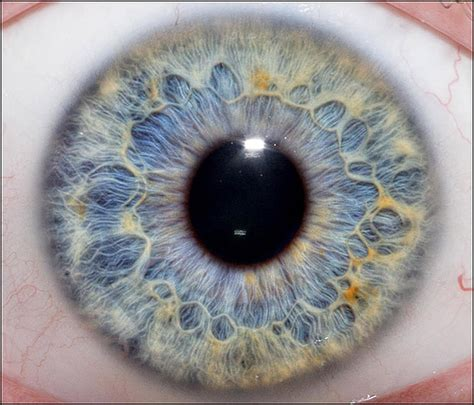 hd eye pattern amazing close up photographs of the human eye and how to