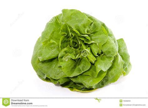 imagenes lechugas verdes una lechuga verde imagenes de archivo imagen 13539234