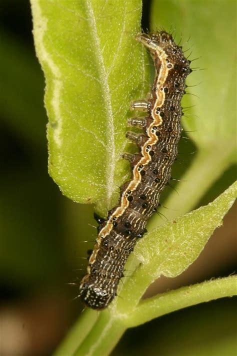 Fastac 15 Ec pestisida hama tanaman kedelai bag 3