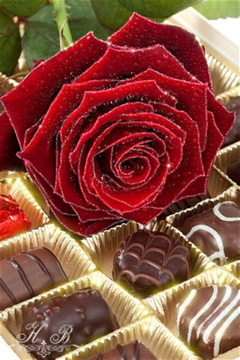 imagenes de rosas con movimiento y brillo rosas rojas con movimiento y brillo para google plus